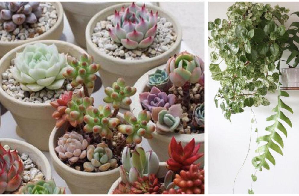 Мой тайный сад: растения в интерьере