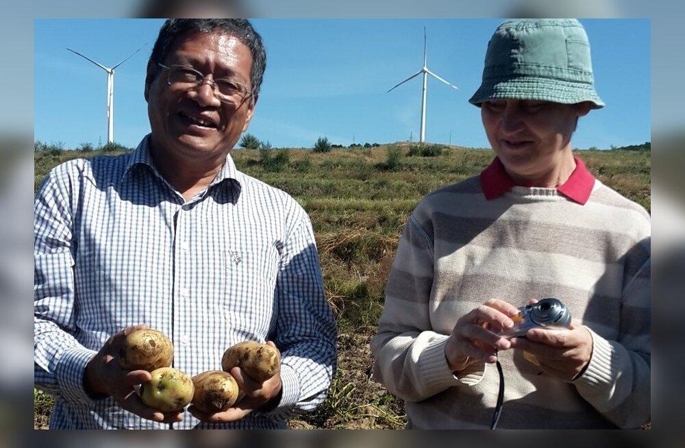 Hiina tuntud kartuliteadlane professor Meng Lingwen ja ETKi teadlane Katrin Kotkas uurivad kartulisorte Liaoningi provintsi põldudel.