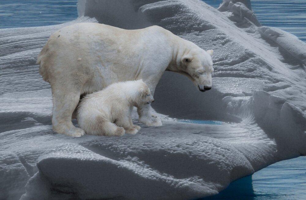 Igaveseks kadunud: kõik need loomad surevad tõenäoliselt kliimamuutuste tagajärjel välja