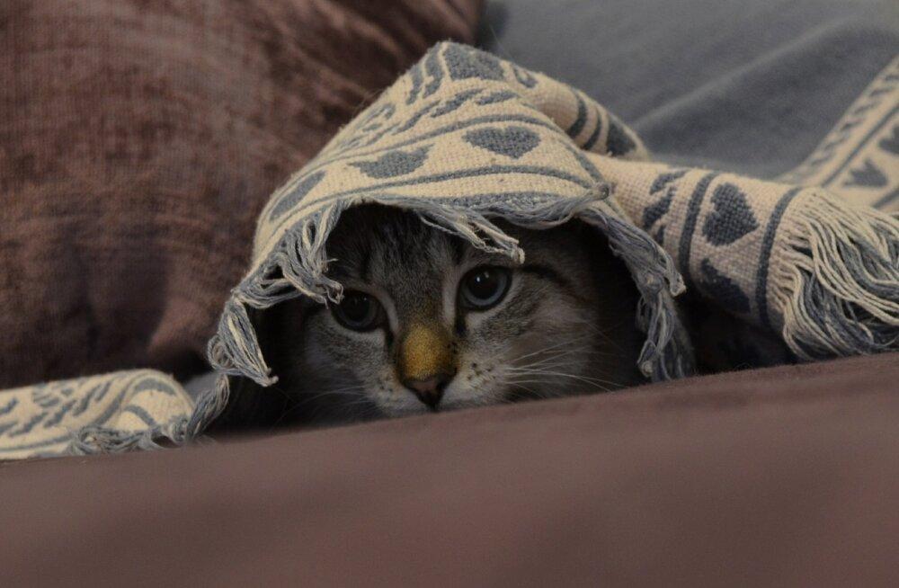 Usaldusväärsem suhe ehk 6 lihtsat nippi, kuidas kassiga sõprust sõlmida
