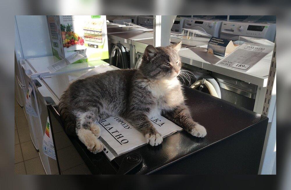 """Две истории об одной нарвской ветклинике. """"Ветеринар залечил кота до смерти"""""""