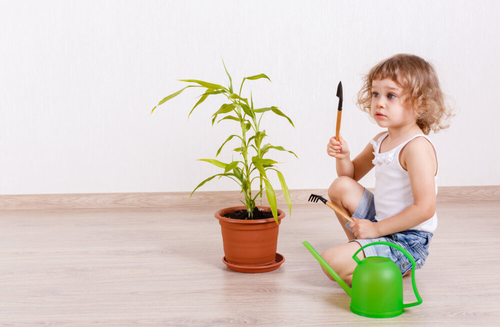 Vesi on toataimede toit. Kuidas muuta seda taimedele sobivaks?