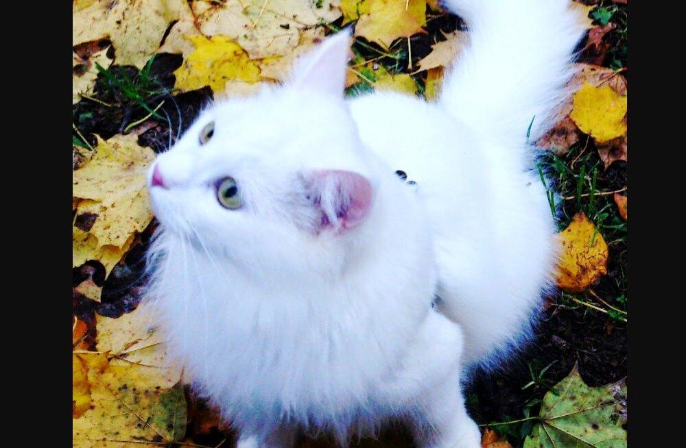 KIISUBLOGI | Tartu kass Ada tuhiseb öösel tolmuhari hambus mööda korterit ringi ja muudkui koristab