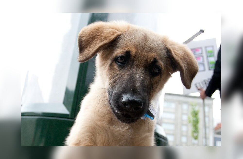 Loomaarst: ärge jätke lemmiklooma silmamuresid tähelepanuta