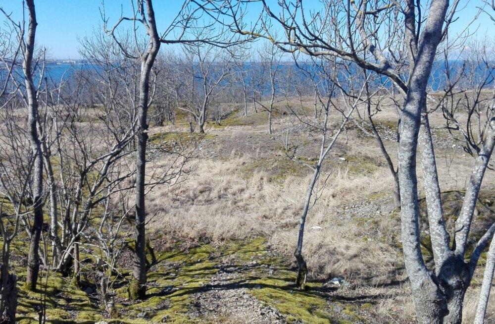 Tallinna ülikooli tudengid: muudame Lasnamäe tühermaad rohealadeks