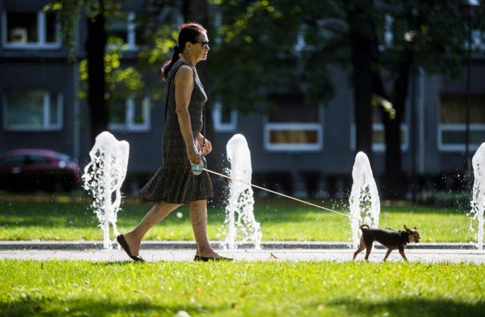 Kuuma ilmaga Tallinnas