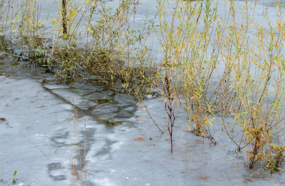 На озере Пюхаярве рыбак провалился под лед