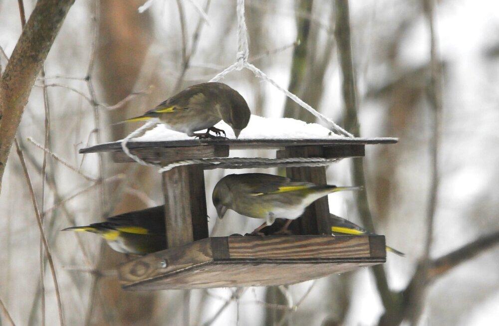 Kui selgub, et innovaatiline linnumaja lindudele siiski ei meeldi, võib alati tagasi pöörduda klassikalise arhitektuuri juurde.
