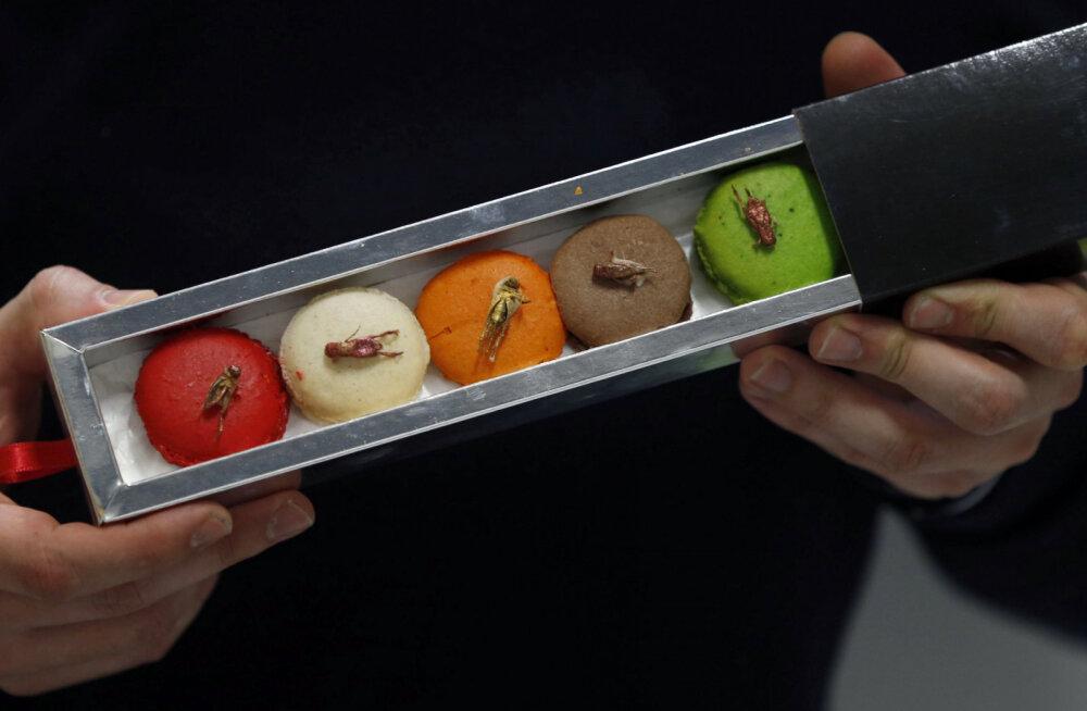 Желе из черепахи и печенье с кузнечиками: самые странные блюда мира, угоститься которыми решится не каждый турист