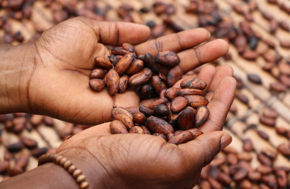 Tugeva tervise nimel: milliseid väekaid seemneid sügishooajal tarbida?