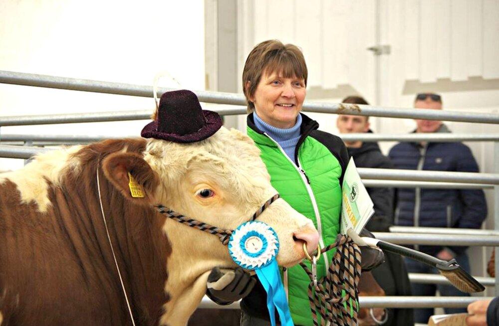 Mõne aasta eest sai Piira OÜ loomakasvatusjuht Maire Järv pulli Ants nii taltsaks, et see nautis konkursil esinemist, kaabu peas.