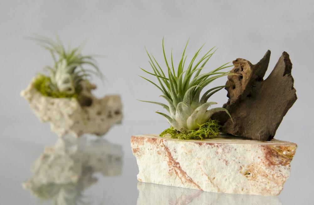 Kas tead, milline taim elab õhust ja natukesest armastusest? Vaata järele!