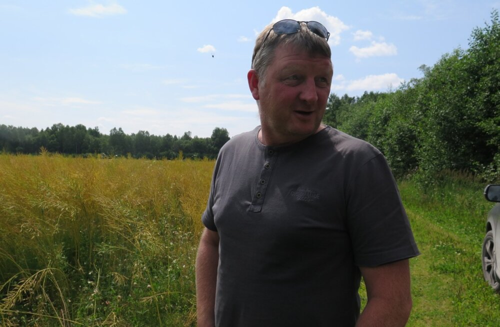 Alar Mutli sai talirüpsiga enneolematu saagi, 3,6 tonni hektarilt.
