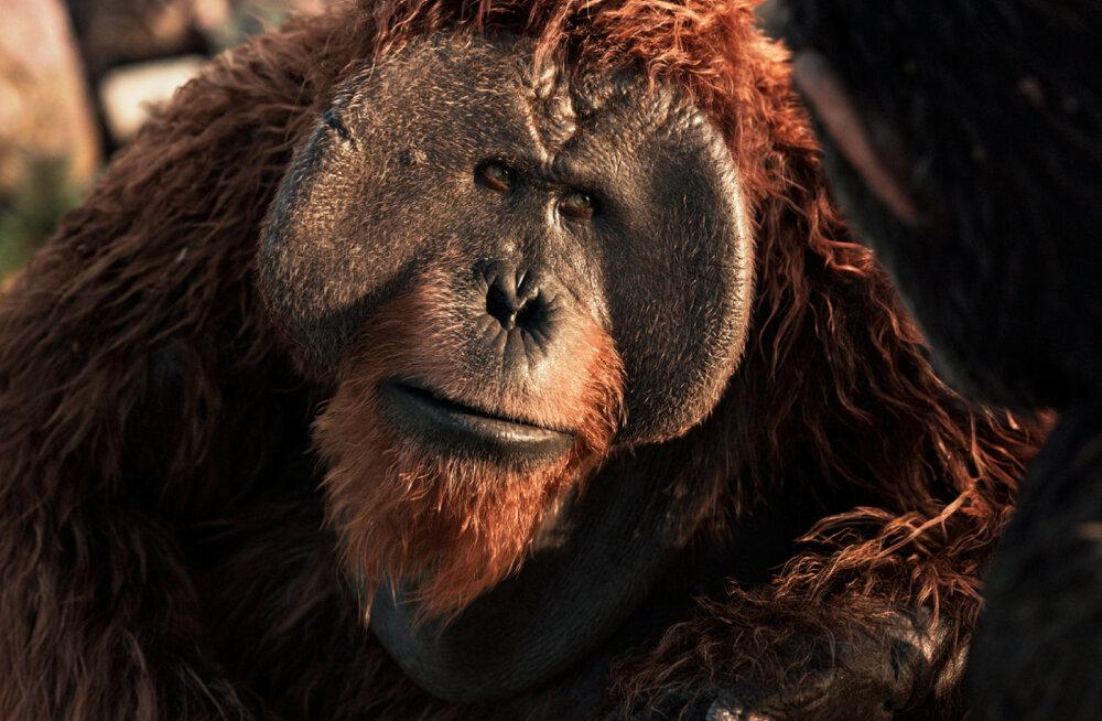 """""""Ahvide planeedi sõda"""" – 10 fakti ahvide kohta, mida sa veel ei teadnud"""