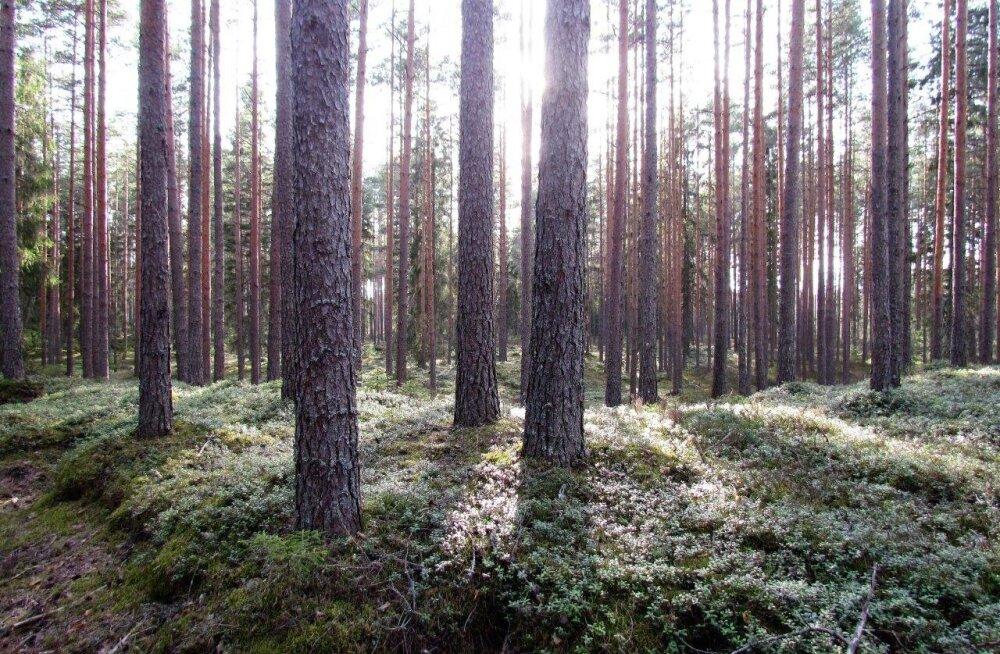 Leili metsalood   Metsamaastikud