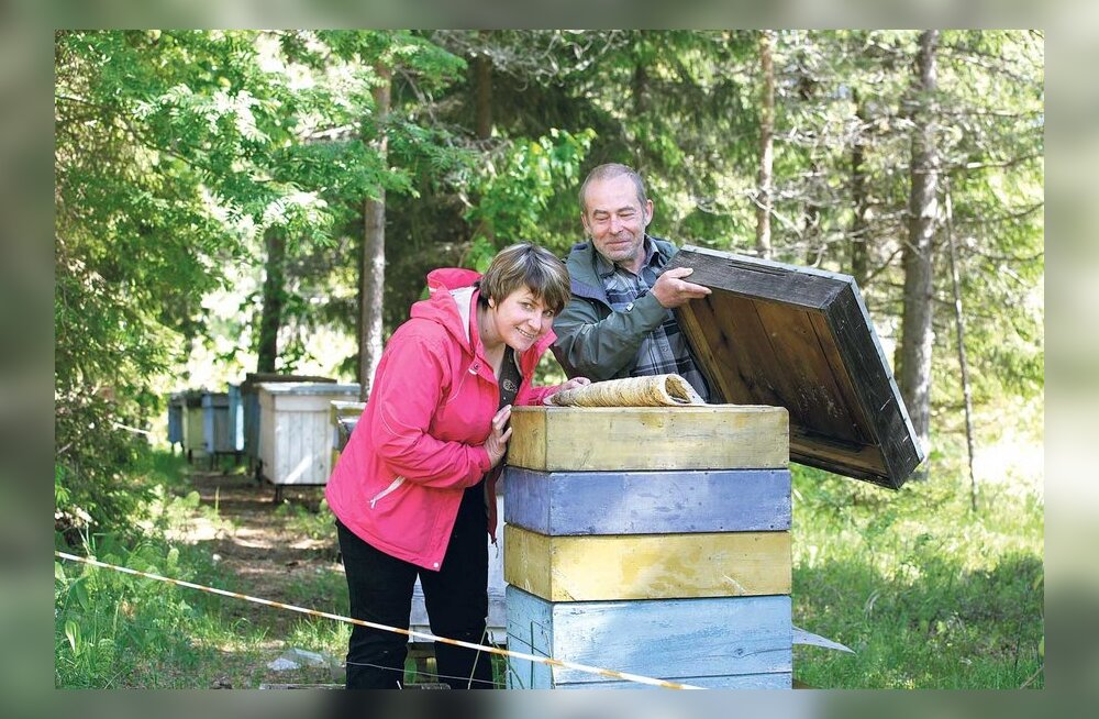 Mahemett maiustatakse mesikäpaga võidu