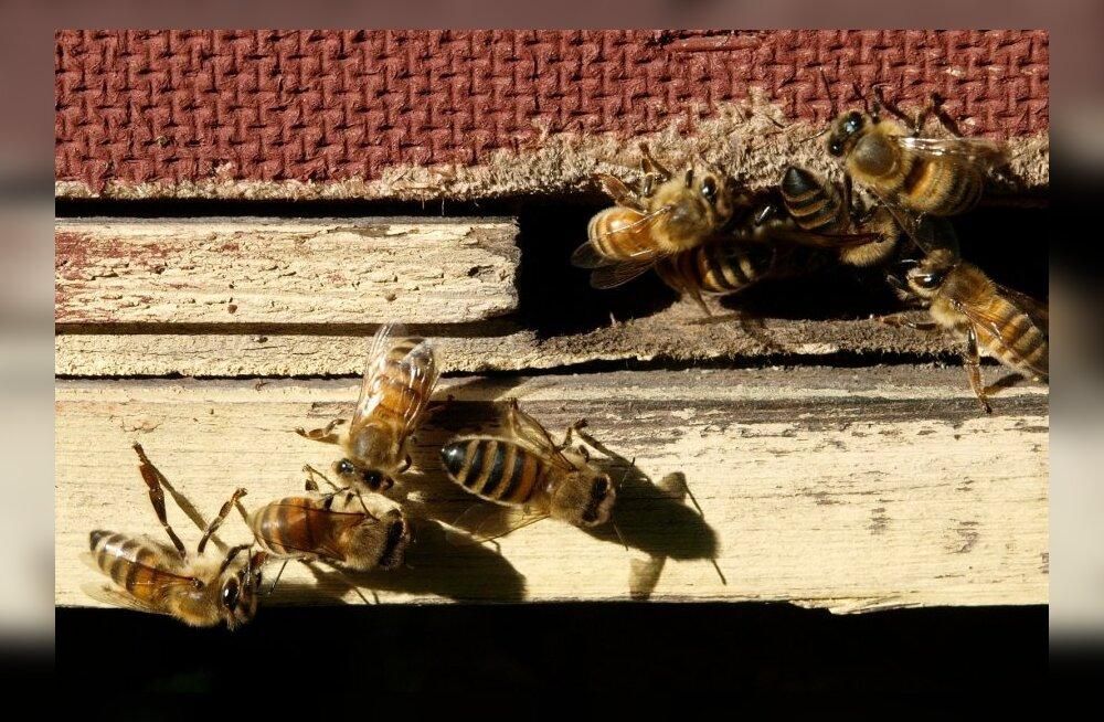 Riigikogu maaelukomisjon: põllumees peab teadma, kus asub mesila