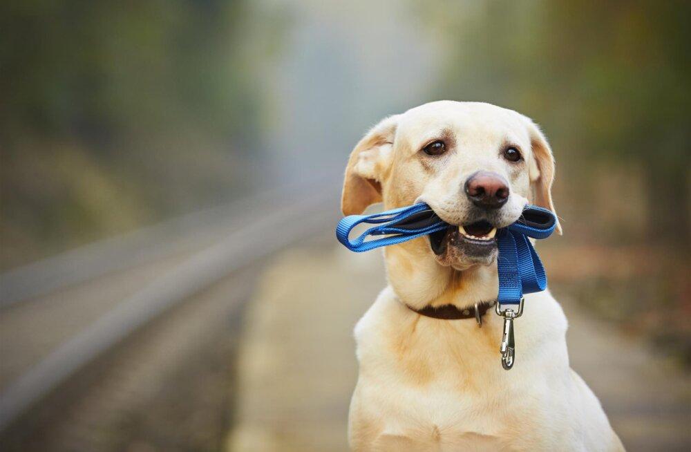 SAA TEADA! Kas su koer on keskmisest targem?