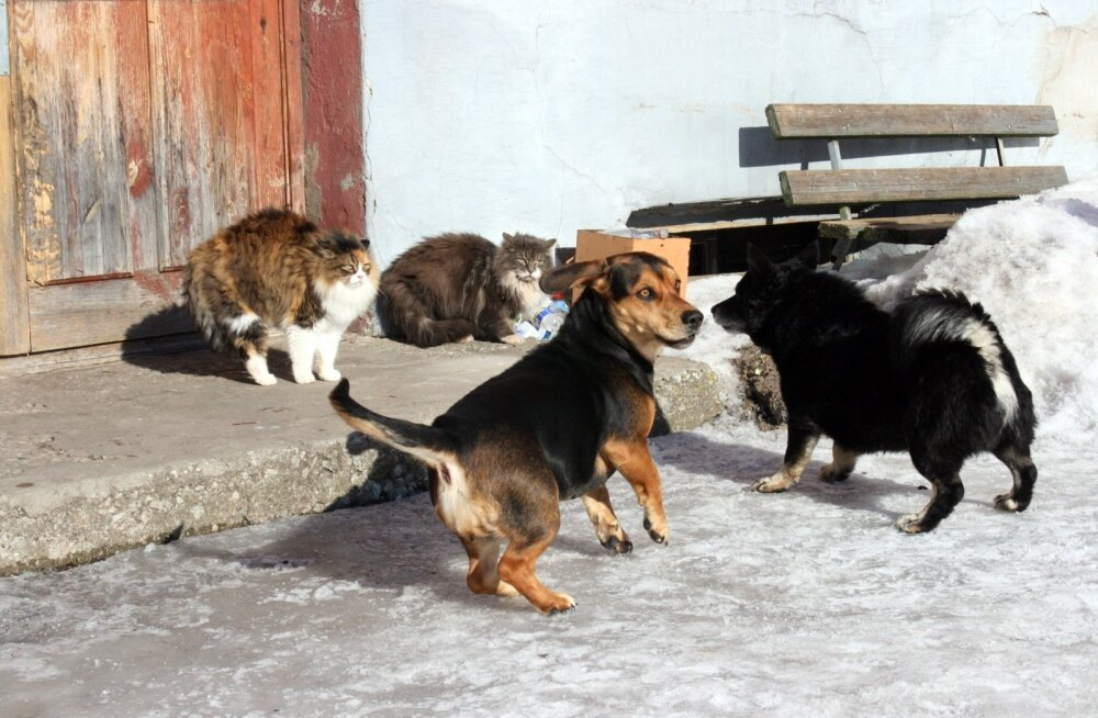 Loomad valdavad Hiina meditsiini nippe suurepäraselt.