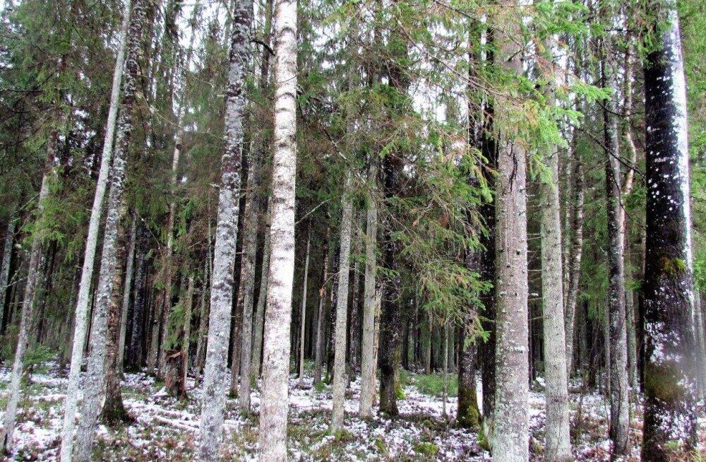 Leili metsalood | Muutuste aasta