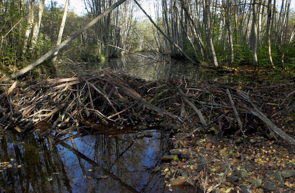 Esna jõgi, veevaesus, kalad,  kopratamm