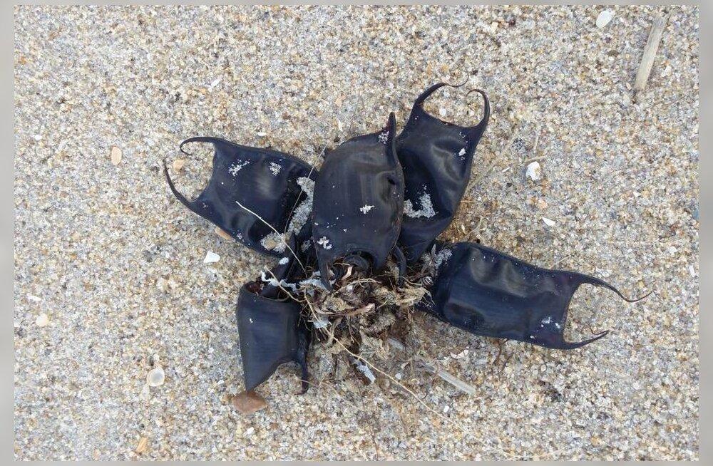 Ookean uhub USA rannikule üllatusliku päritoluga kummalisi nahast taskuid
