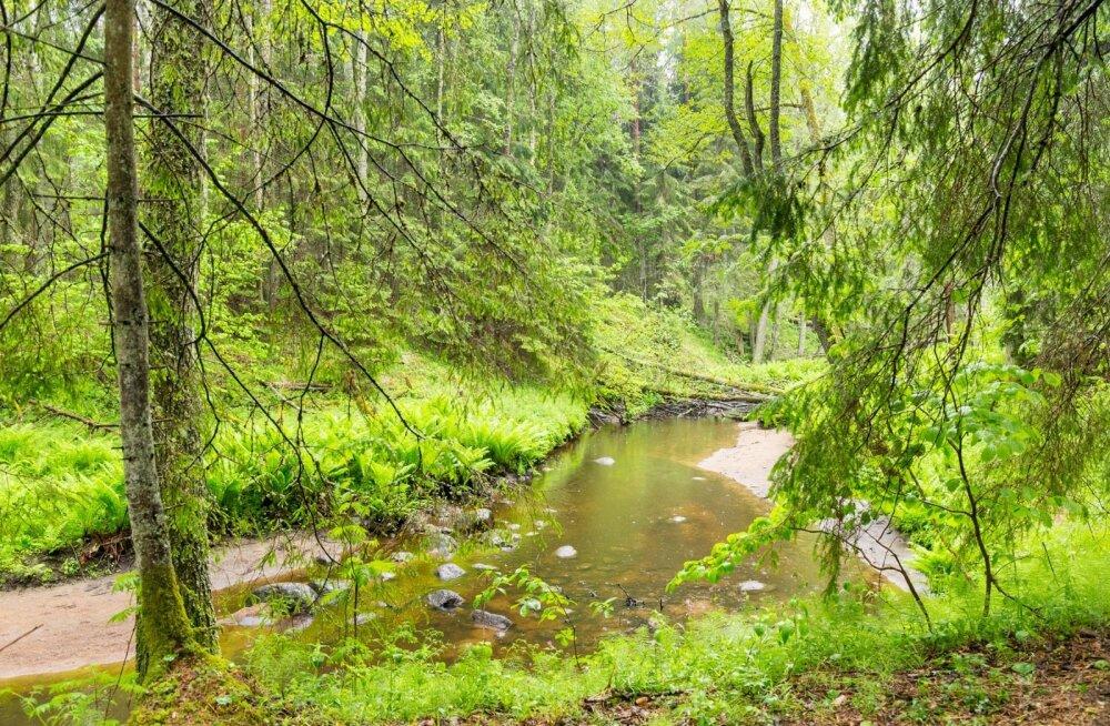 Looduslikus veekogus voolab vesi aeglaselt ja jõuab mineraal- ja toitainetest puhastuda.