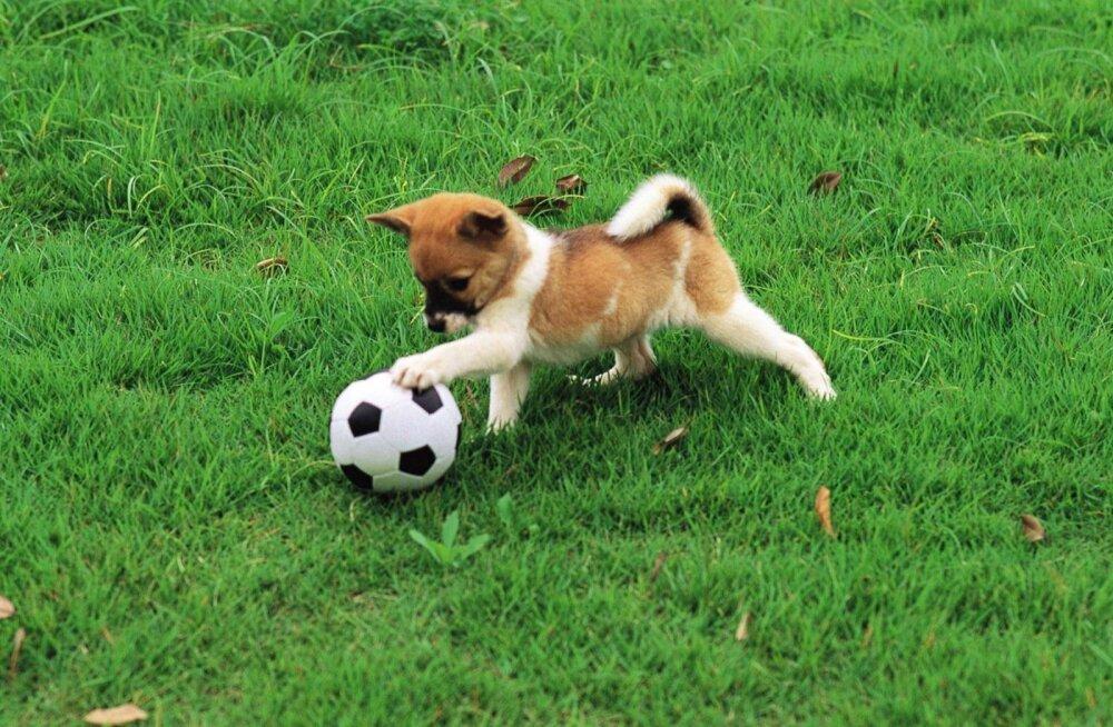 10 koeratõugu, kes on sportlikeks väljakutseteks alati valmis