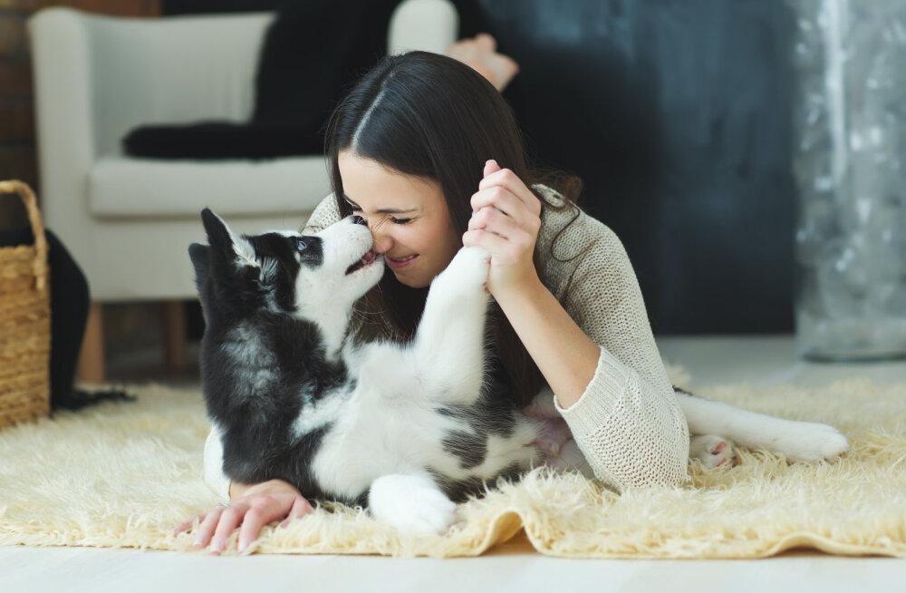 TEST | Milline koer sul kodus on? Kas tead, millisele isiksusetüübile ta vastab?