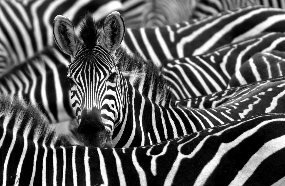 Põnev TEST: Kas sa tead, millise kütkestava looma iseloom Sinus peitub?