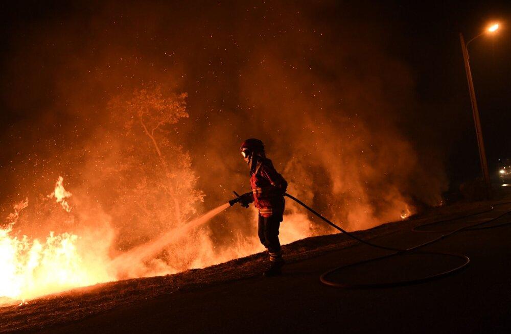 Portugali metsapõlengutes on ära kõrbenud viis protsenti riigi pindalast