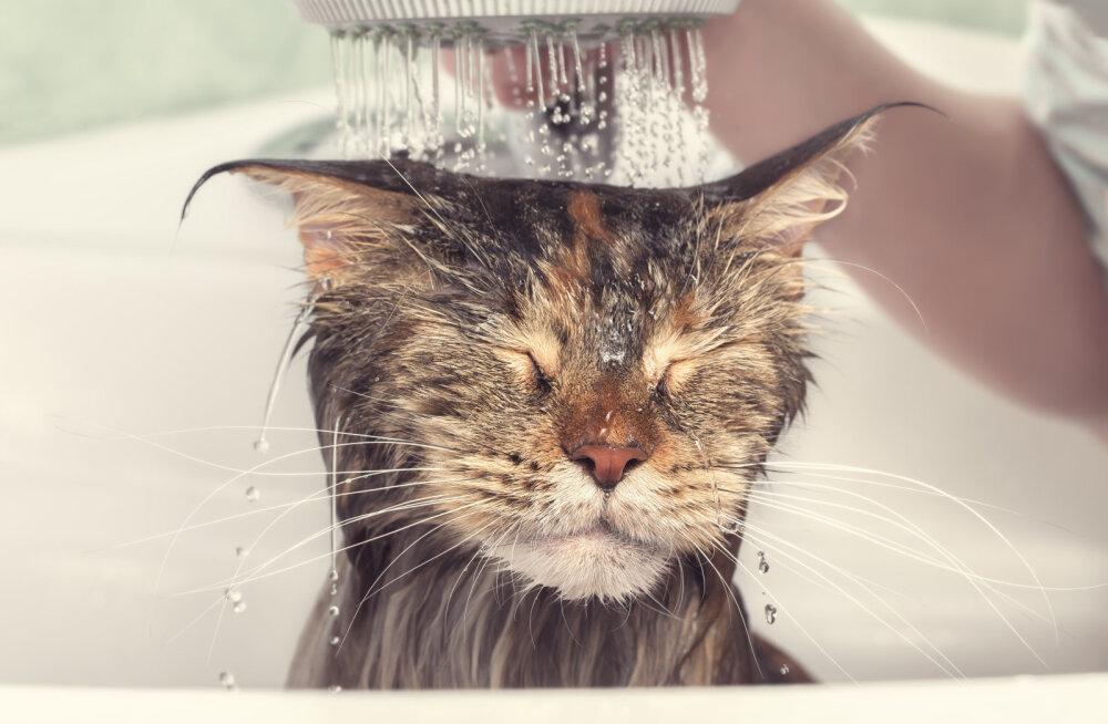 Kas kodukassi peaks aeg-ajalt ka vannitama?