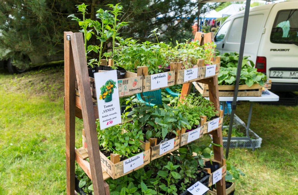 Türi lillelaadal müüdi tomatitaimi hinnaga kaks eurot tükk.