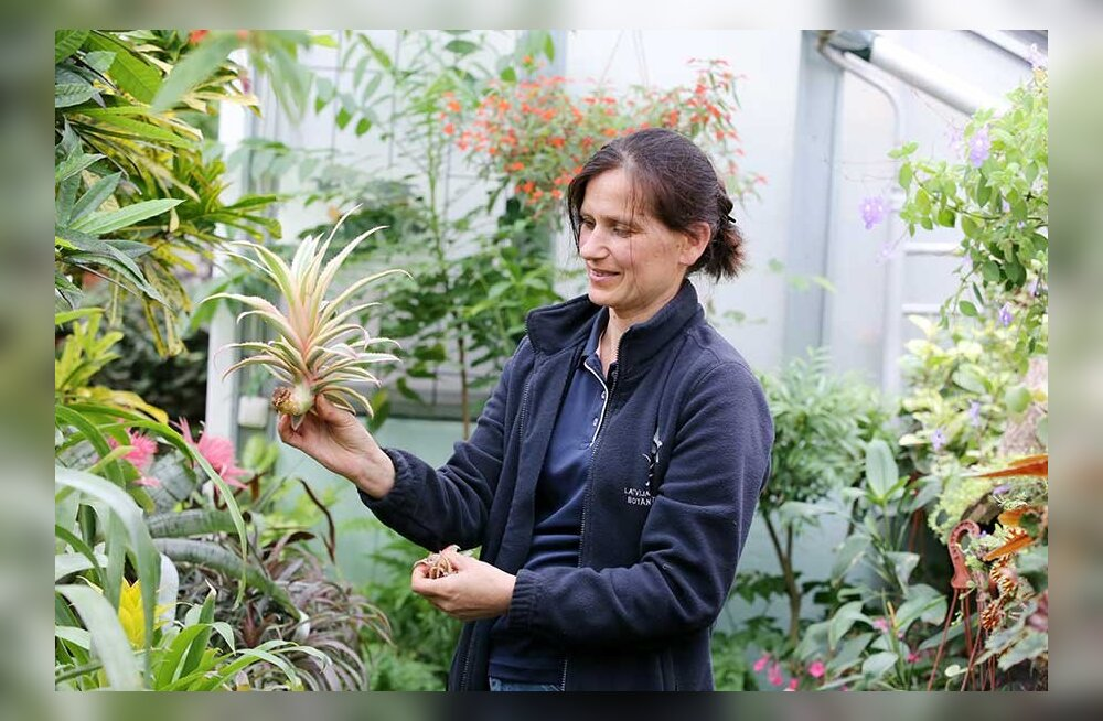 Украшаем дом экзотическими растениями: что вырастить из косточки, хохолка и корешка?