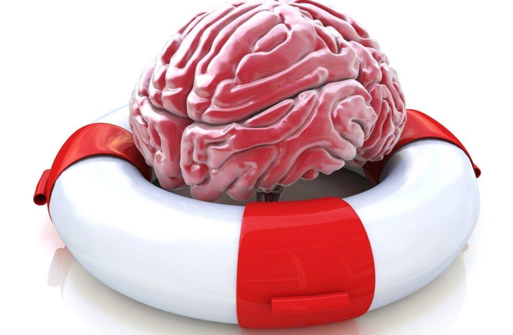 Miks ja milleks: mälu, meri, teadus