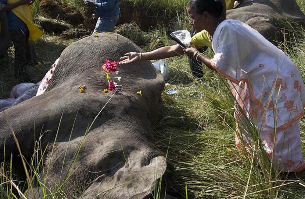 INDIA SURMARONG | Reisirong rammis täiel kiirusel elevandikarja