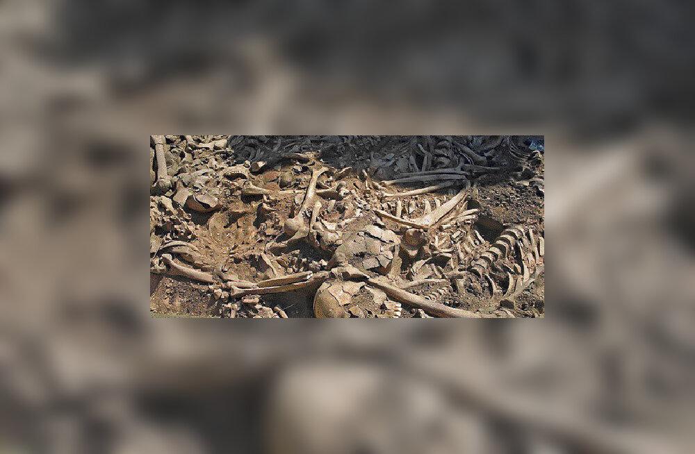 Tartu lähedalt leiti ühishaud ligi 7000 aasta vanuste luustikega