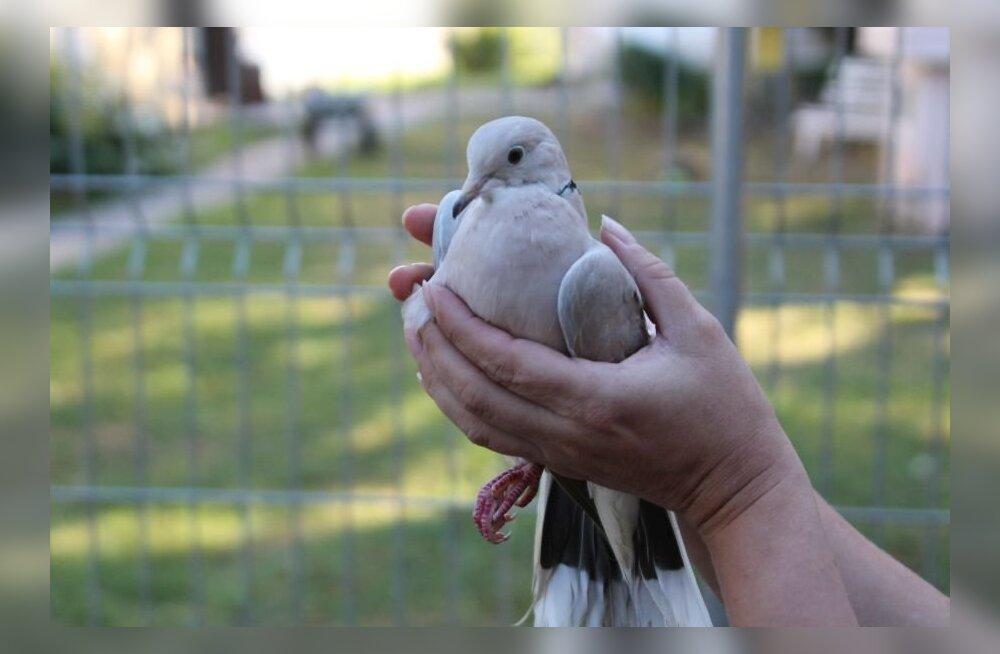 Miks mitte võtta koju paar vahvat itsitajat? Tartu loomade varjupaigas ootavad uut armastavat kodu kümme naerutuvi