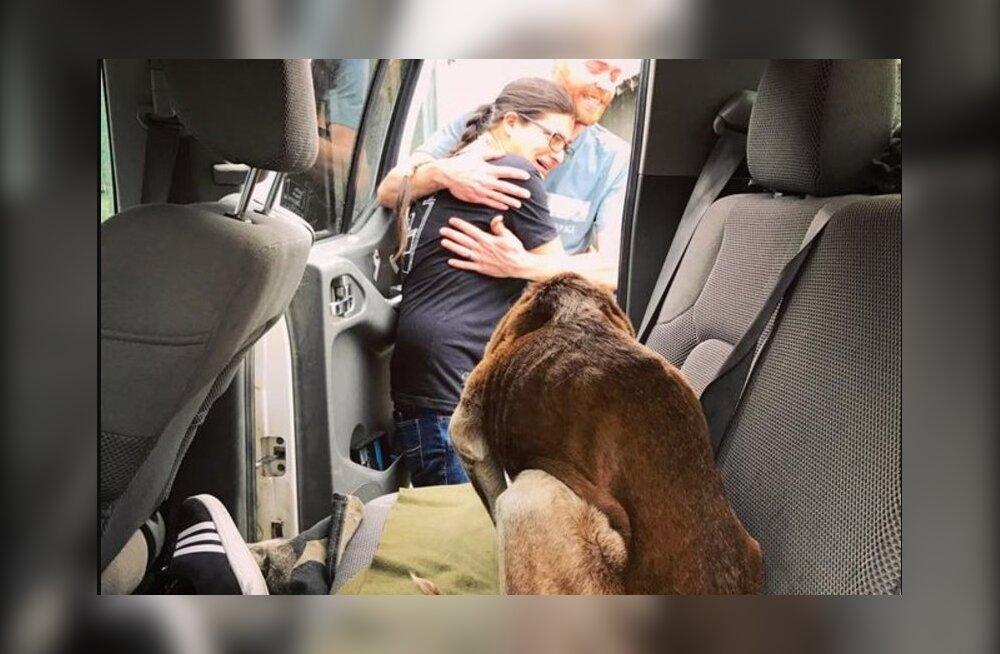 14-aastane koer mägedes: matkajad päästsid nälginud ja kuueks nädalaks mägedesse lootusetult eksinud koera