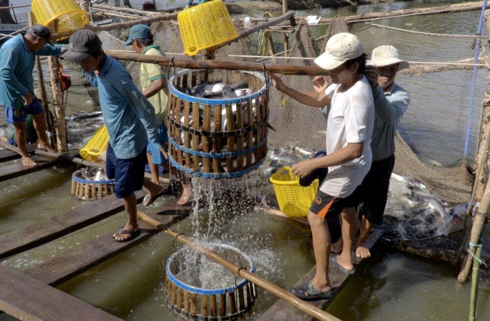 HOMSES MAALEHES | Läänemere räim võib olla reostunum kui Vietnami pangasius