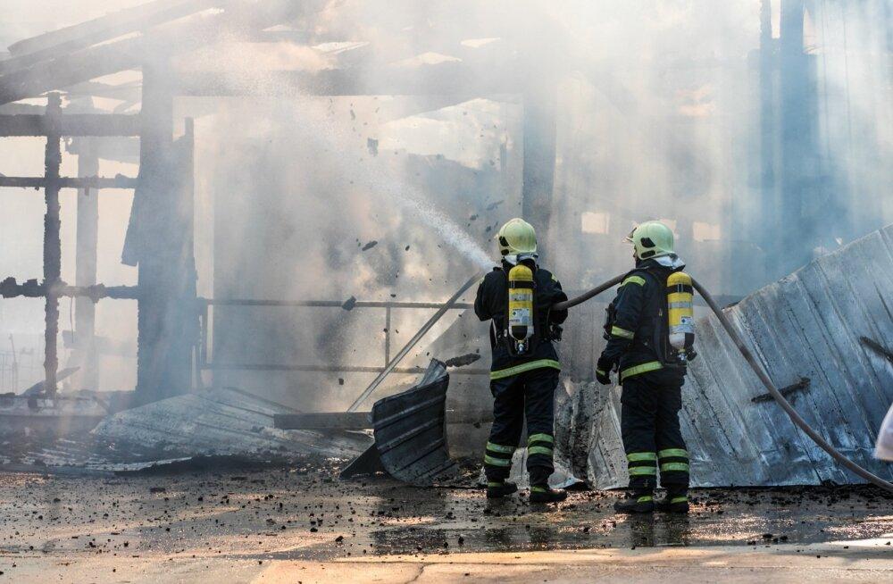 Raplamaal Ingliste külas süttis külmkapist laut, milles hukkus 44 vasikat.