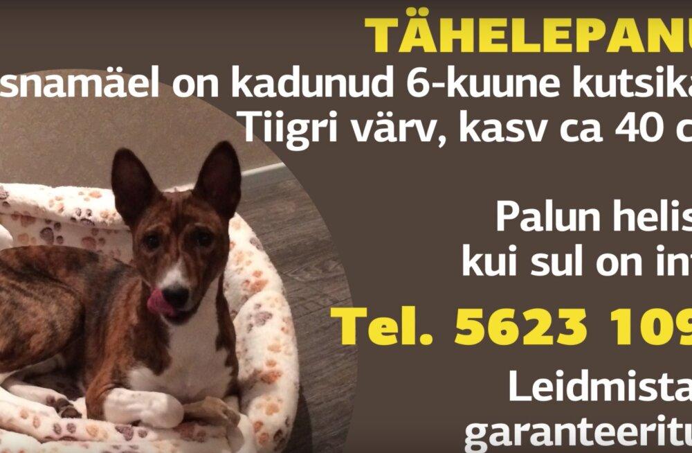 Призыв читателя: помогите найти собаку, она помогает ребенку справиться с фобиями
