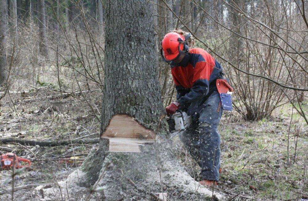 Luua metsanduskooli õpe on välja arendatud koostöös tööandjatega.