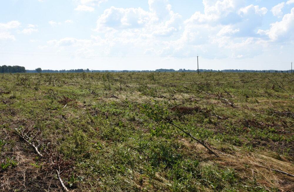 MEIE MAA | Suur paplite istandus tuli traktoriga maha sõita