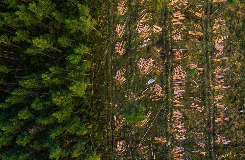 ENNE JA NÜÜD: Metsa raiumine.
