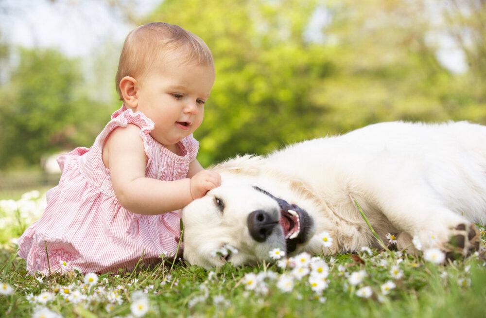 Koerad ja beebid | 8 õpetussõna, mida koerte ja beebide puhul jälgida või vältida
