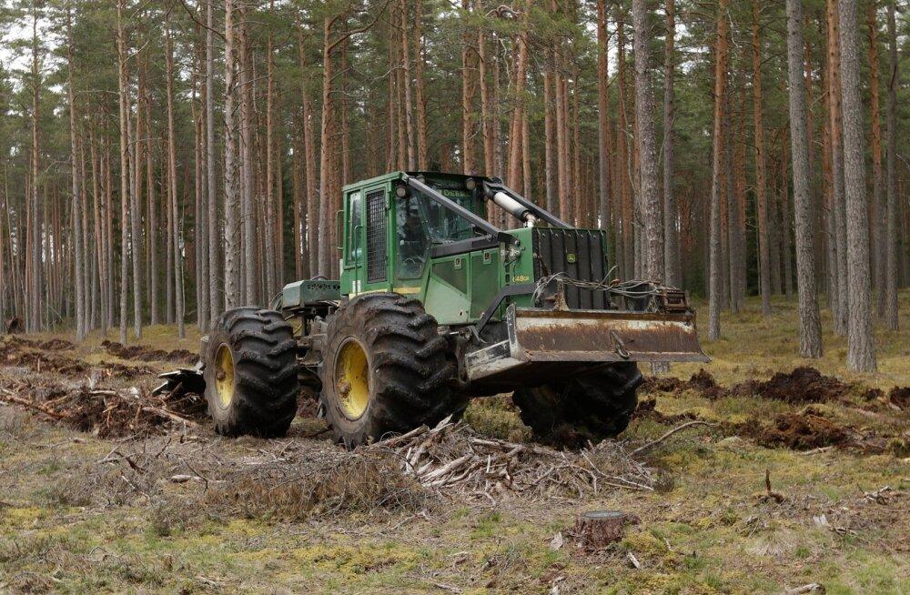 RMK metsaistutus Kirde regiooni metsades