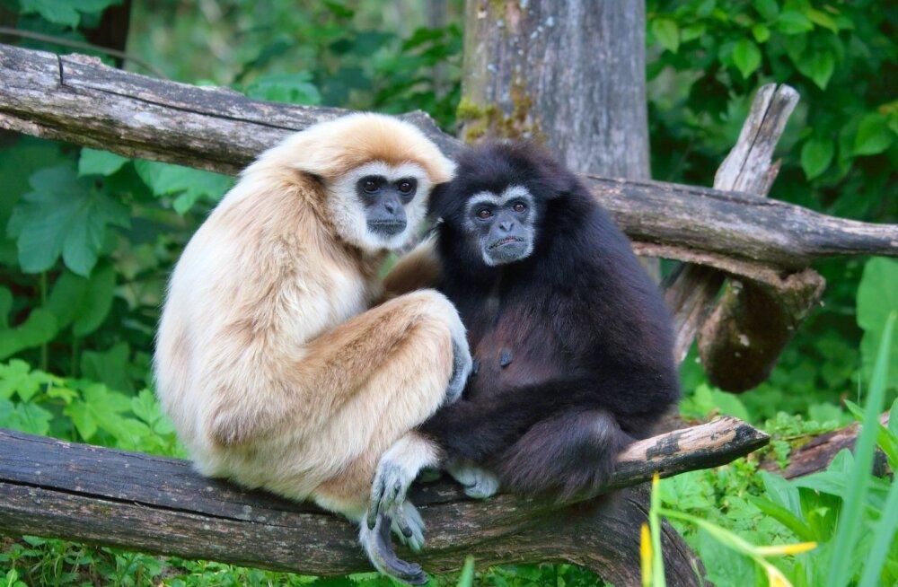 Suurimad romantikud loomariigis: need loomad juba naljalt truudust ei murra