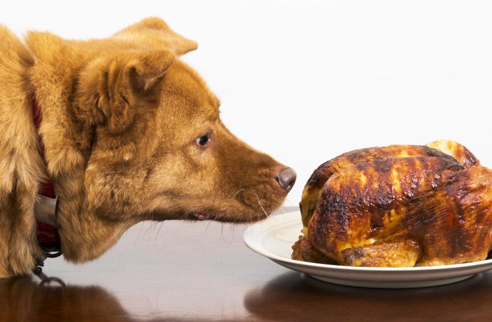 TOP 5 | Halvad käitumisharjumused, mida koeraomanikud oma lemmikule pahaaimamatult, kuid sageli õpetavad