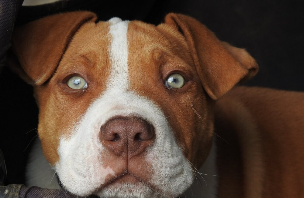 Koeraomanik hoiatab: hirmutav põhjus, miks ei tohi poolikuid krõpsupakke laokile jätta!